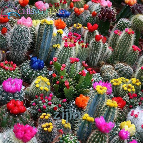 Top 10 Largest Japan Flower Plants List And Get Free Shipping
