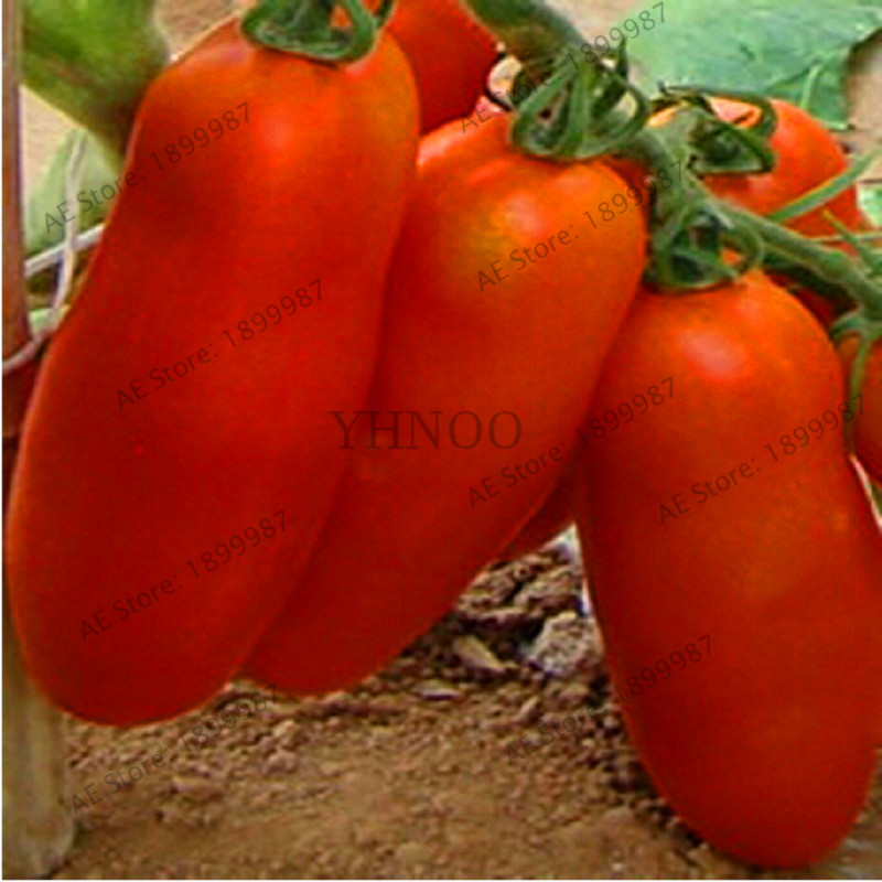 Лидер продаж! Heirloom красный томатные растения, клубника томат бонсай, Professional Pack, шт./упак. 100, Органические растительные растения для hom