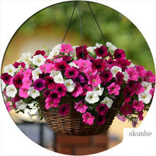 high quality many color Hanging petunia bonsai 4 seasons indoor balcony easy to plant flower bonsais 100 pcs(China)