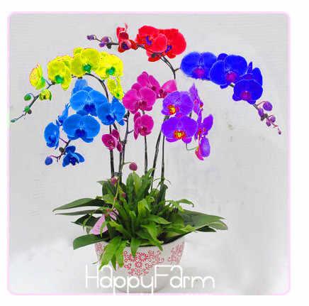 Nuovo Arrivo! 200 pz/lotto Unico Arcobaleno Farfalla Orchidea di Piante Da Giardino Bonsai Pianta Phalaenopsis Plantas, #9WMZE8