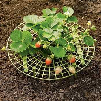 10 個の植物プラスチックツールイチゴ成長サークルサポートラック農業改善収穫フレーム軽量リムーバブル簡単インストール