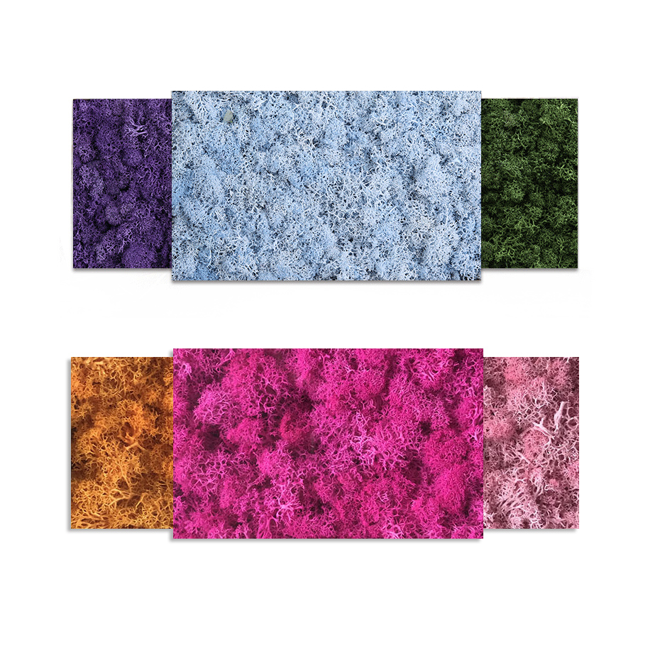 Mothers Day Gifts 200g DIY Decoration Long Time Lasting Preserved Moss Flower  for Furnishing with All Kinds of ColorMothers Day Gifts 200g DIY Decoration Long Time Lasting Preserved Moss Flower  for Furnishing with All Kinds of Color