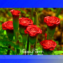 Time-Limit!! 100 Pcs/Bag Red Carnation 'Red Up Lamp Bulb' Perennial Flower garden, Bonsai Fragrant Flower(China)
