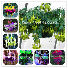 New Arrival !Multicolor Pink Double Petals Fuchsia Bonsai Potted flower Garden Plants Hanging Lantern Flowers 50 Pcs/Bag(China)