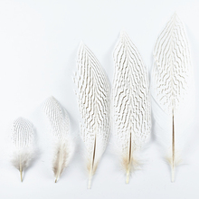 10Pcs/Lot Natural Silver Pheasant Tail Feathers for Crafts 10-30CM 4-12 Inch Wedding Decorations Chicken Feather Plumes