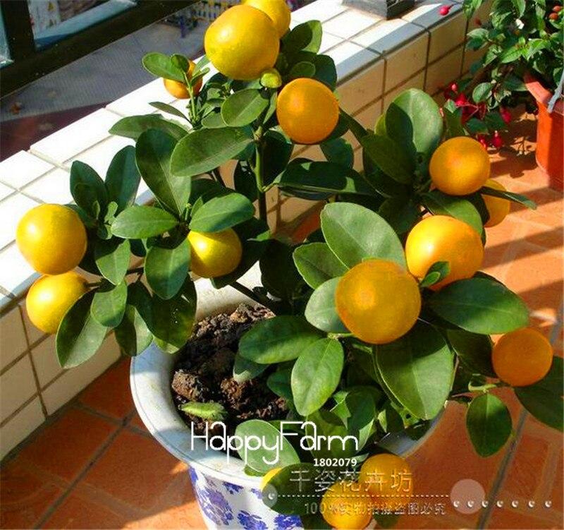 New 2018!50 Pieces /Lot ,Lemon Bonsai, Potted Balcony, Planting Seasons, Sprouting 95%(Kaffir Lime),#JHIN9K