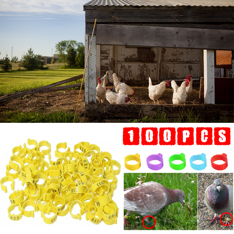 top 10 largest chicken band numbered list and get free