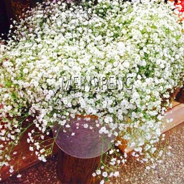 Большая Акция! 100 шт./пакет Гипсофила метельчатая карликовые деревья, красивые цветочные растения, декоративные цветы для дома и сада, # L8GR52