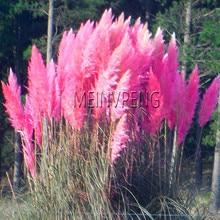 Акция потери! травы Бонсай цветные домашние садовые растения очень красивые цветы растения декоративные 400 шт,# JR8LES