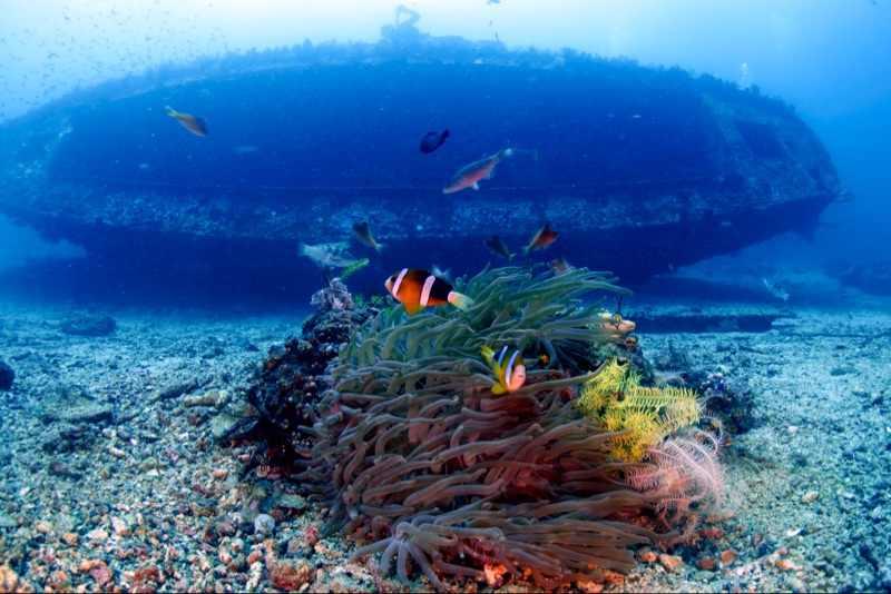 Nitescuba ダイビング海 & 海 ys D2 ストロボライト & inon フロート weefine tg5 wfl02 広角レンズカメラケース水中撮影