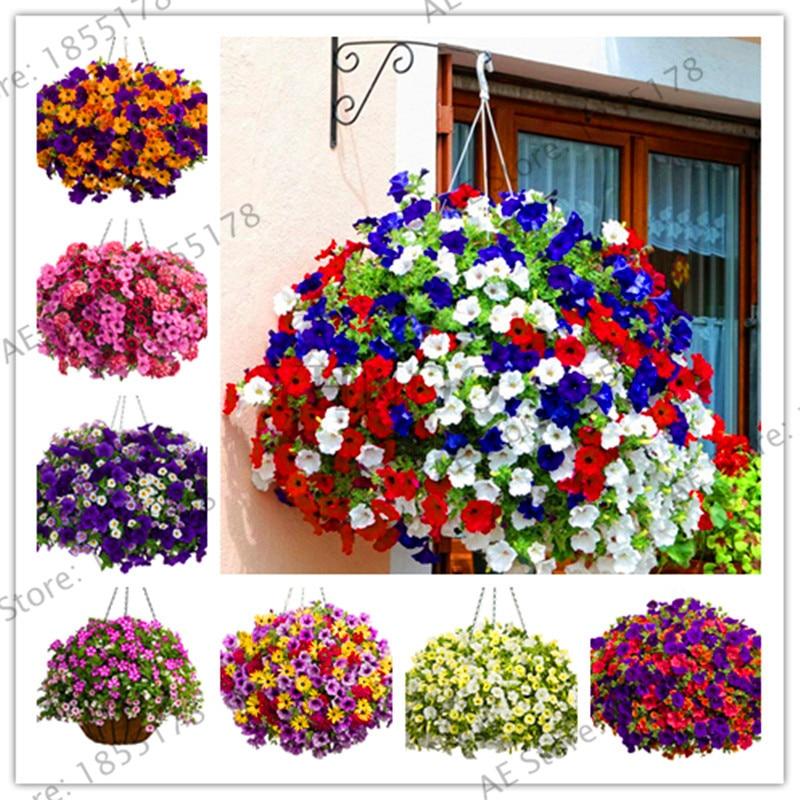 Акция! 100 шт. висит петунии растения Melissa оригинальный цветок Plantas Многолетние цветы для дома сад бонсай посадки P
