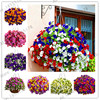 Promotion!100PCS Hanging Petunia Plants Melissa Original Flower Perennial Flowers For Home Garden