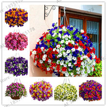 Promotion!100PCS Hanging Petunia Plants Melissa Original Flower Plantas Perennial Flowers For Home Garden Bonsai Pot Planting P(China)