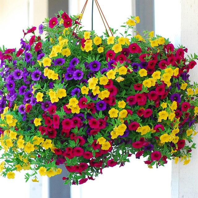 € 0.09 60% de réduction|Héritier suspendu pétunia mixte bonsais (100  pièces), variété rare, rustique, très belles fleurs de jardin illuminent  votre ...