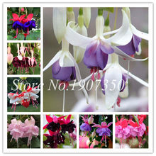 Japanese 50 Pcs Mixed Fuchsia Bonsai Garden Balcony Bonsai Lanterns Flowers Spectabilis Potted Flowering Diy Plant Bonsai(China)