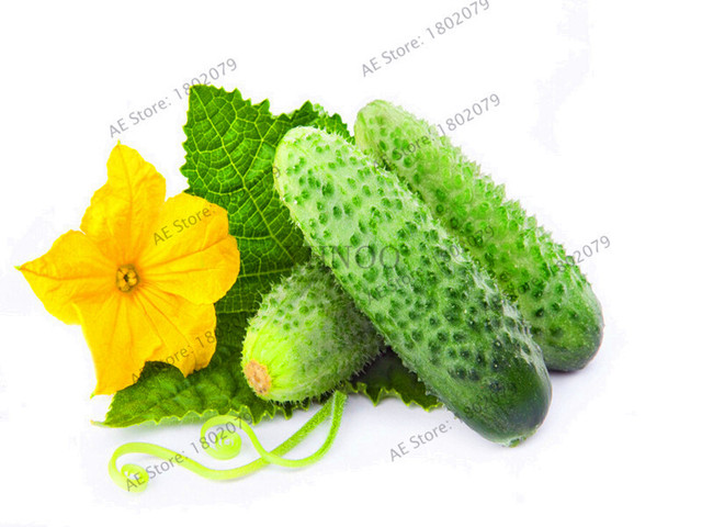 Hot Sale!100pcs/bag mini cucumber Bonsai,Miniature cucumber,Organic fruit vegetable Plantas,miniature garden,rare plants for ho
