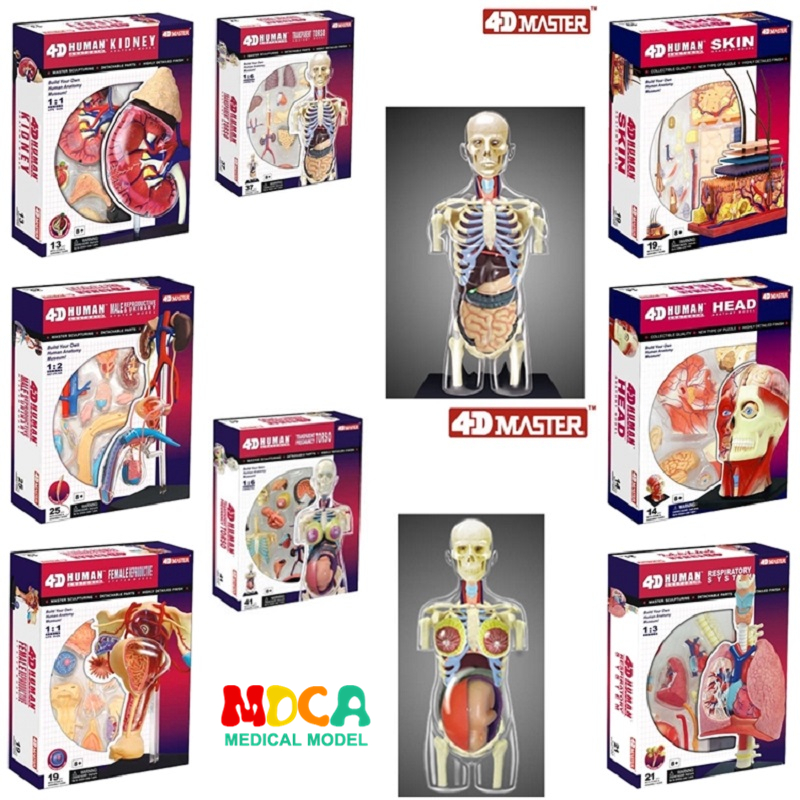 4d master puzzle Assembling toy human body organ anatomical model medical teaching model 8 Species selection4d master puzzle Assembling toy human body organ anatomical model medical teaching model 8 Species selection