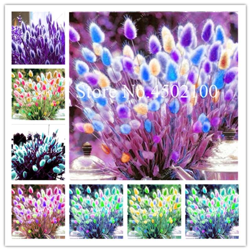 Bonsai 200 Pcs Blue Tails Grass, Mixed Perennial Hardy Ornamental Beautiful Grass Flower Pot plants Easy Grow For Home Gard figure class ultra instinct goku