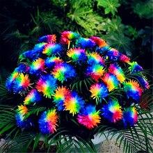 Lowest Price!200pcs/bag rainbow daisy flores,chrysanthemum plantas,bonsai flower plante,beautiful potted plants for home garden,
