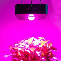150W Growing Lamp COB LED Grow Light Full Spectrum 380 800nm Plant Lighting Fitolampy for Plants Flowers Seedling Cultivation