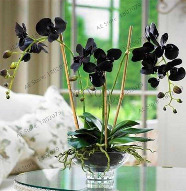 Ósvikinn! 100 stk / poka Orchid flores, Orchid blóm phalaenopsis plöntur fyrir heimili garð ævarandi plöntur á svalir bonsai Plant orch