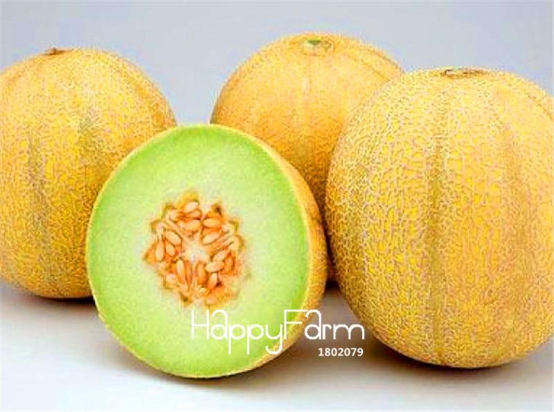 100 Pcs Seeds Mini Sweet Melon Bonsai Tree Organic Fruit Vegetable Home Garden B Akamapp Ir