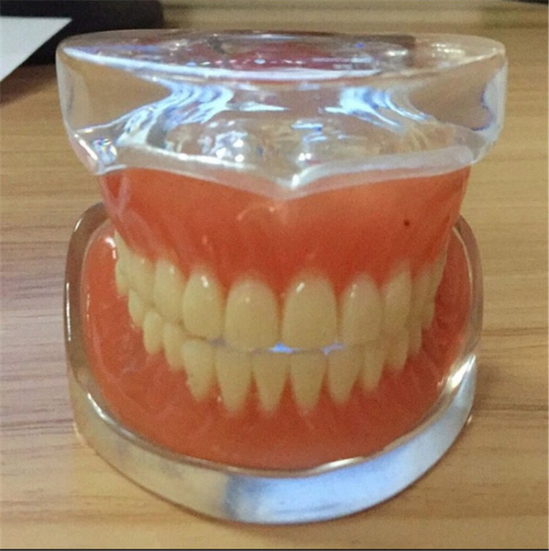 6 pcs/lot étude dentaire modèle d'enseignement modèle Standard avec base claire