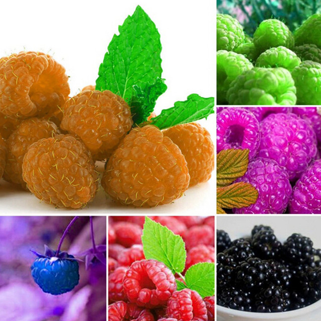Подлинная дикая Малина bonsais для дома и сада-бонсай фруктовый завод bonsais 300 шт. (она мэй)