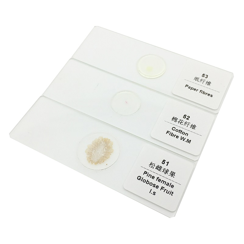 200 Pieces Prepared Microscope Slide Plant Animal Insect Glass Sheet School Biological Teaching Studying Equipment for Student