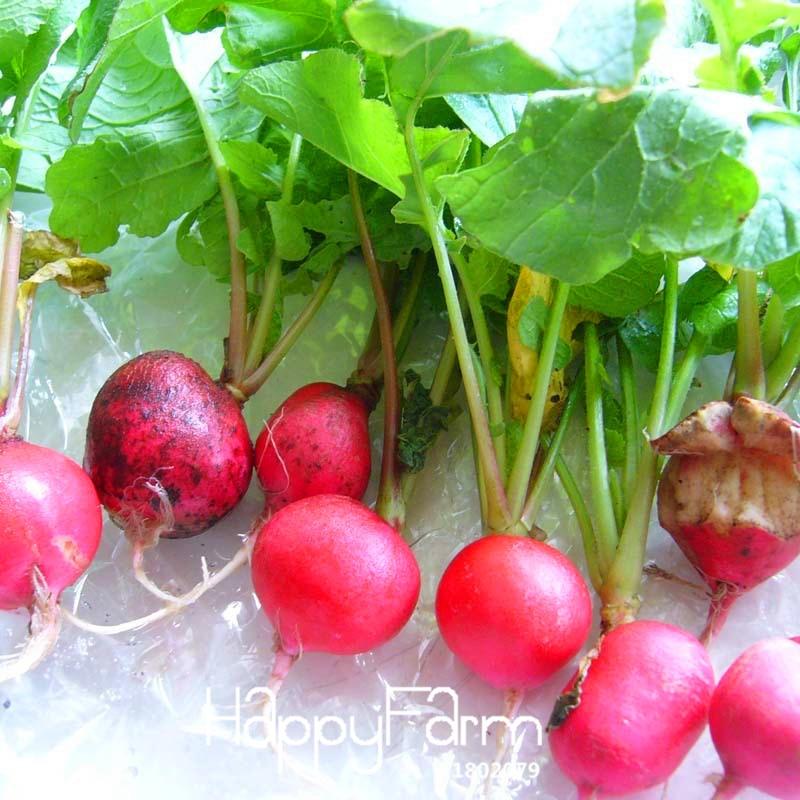 Big Sale!Redskins Fruit Radish Vegetable Bonsai Garden ...