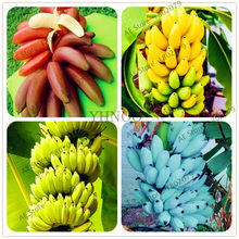 100pcs/bag Banana bonsai,dwarf fruit trees,delicious Perennial Fruit flores For home and Garden plants(China)