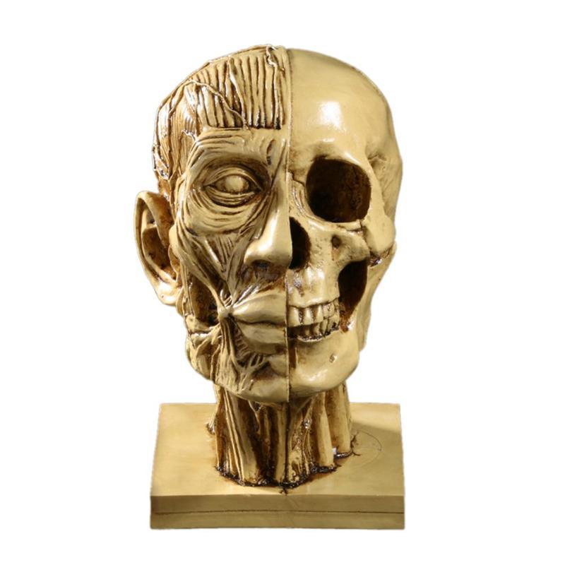 VODOOL Resin Human Head Medical Model Skull Statue Sculpture manikin Home Decorative Craft Kits Halloween Gifts School Supplies