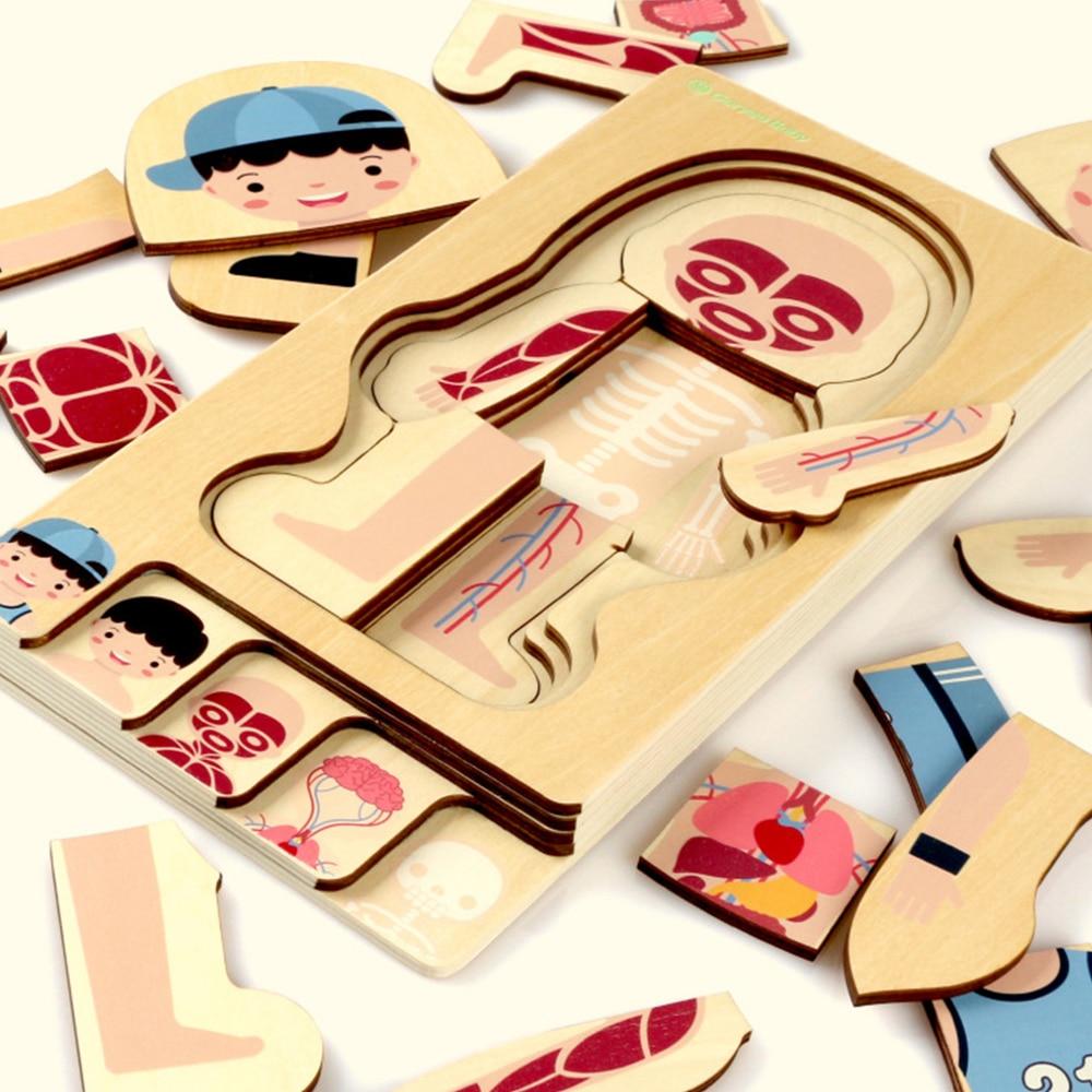 Montessori éducatif enfants jouets en bois corps humain Puzzle garçons filles corps Structure enfants Puzzles enfants jouets 43