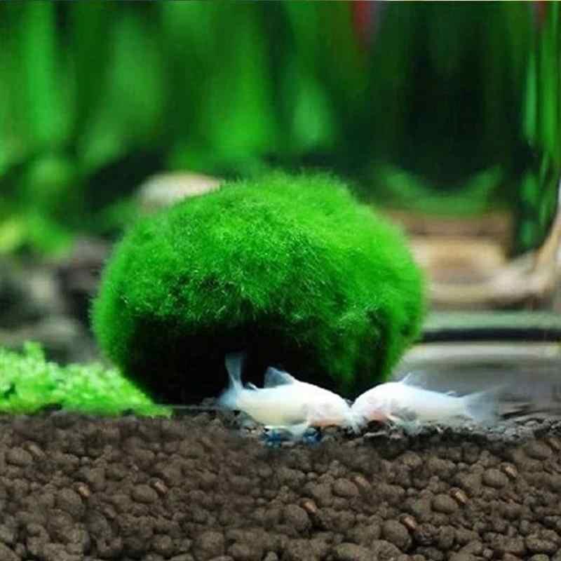 5 pcs Marimo Moss Bóng Cây Thủy Sinh Hồ Cạn Cladophora Bóng Trang Trí Bể Cá