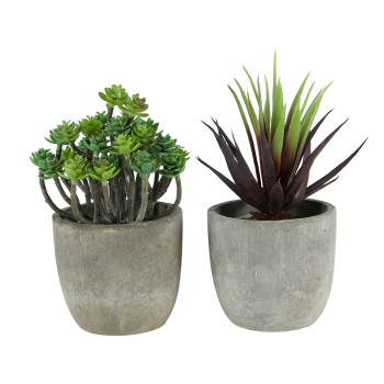 2 Succulent Artificial Plants with Pots (Dark Aeonium and Red Gladiolus) Artificial Plants Bathroom Bedroom Departments Dining Room Entryway Living Room Outdoor Rooms
