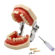 Стоматологическая стандартная модель съемных зубов Модель стоматологического исследования обучающая модель зубов мягкая модель десен стоматологический демонстрационный инструмент