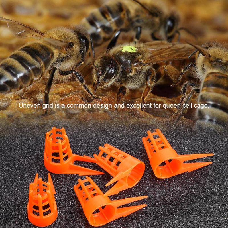30pcs/Pack Bee Queen Protective Cellular Tools Beekeeping Supplies For Farm Bee Feeding Equipment Supplies Bee Tool