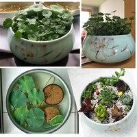 Narcissus basin celadon red lotus basin coins grass hydroponic flowerpot ceramics succulents vasos para Flower Pot Drop Shipping