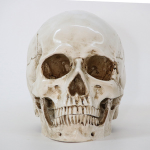 Statues Sculptures Resin Halloween Home Decor Decorative Craft Skull Size 1:1 Model Life Replica Medical High Quality(China)