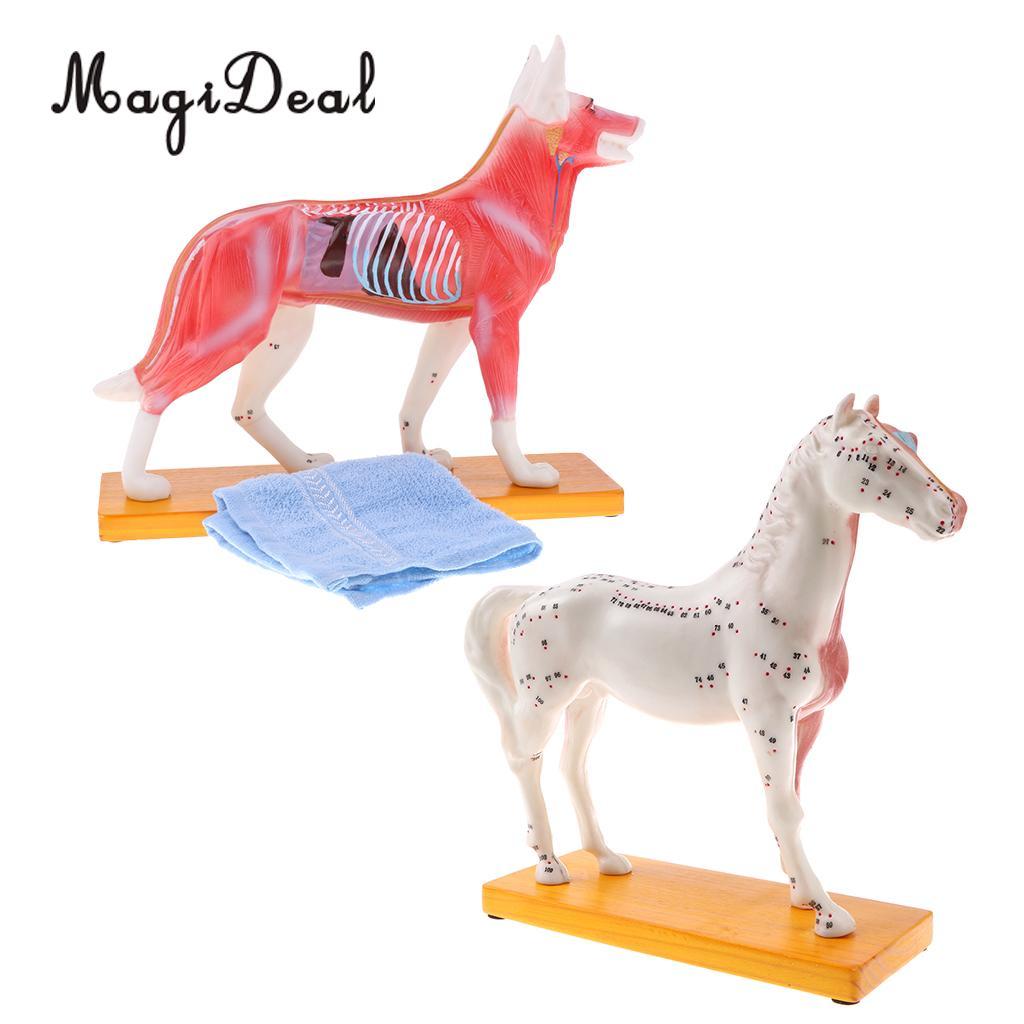 2x Points d'acupuncture professionnels cheval et chien modèle anatomique école outil d'enseignement fournitures de laboratoire