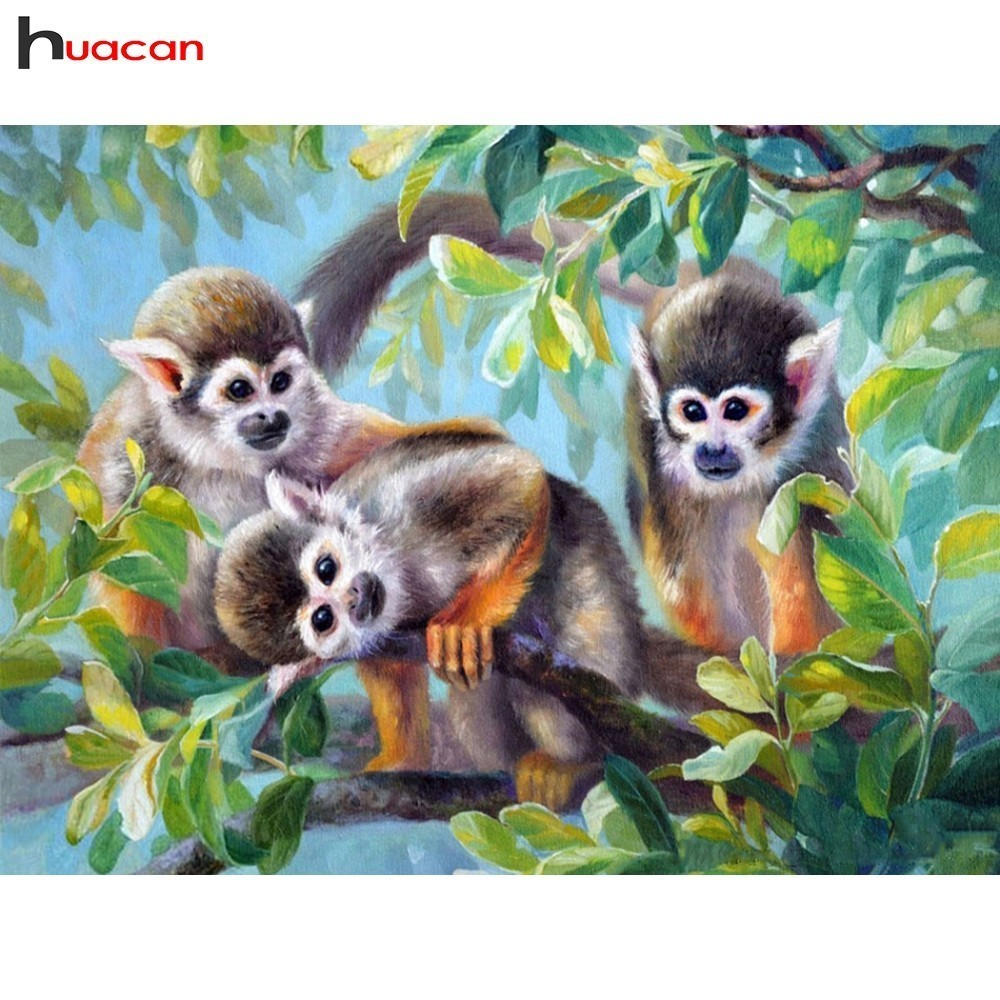 Two Common Squirrel Monkeys Playing on a Tree Branch,Men//Womens Warm Outerwear Jackets and Hoodies S Saimiri sciureus