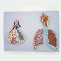 Human Relief Model of Respiratory System With Pulmonary Alveoli Anatomical Medical Teaching Resources