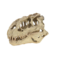 Tyrannosaurus Rex Skull Cave Landscaping Decoration Fish Tank Resin Dinosaur Skull Model Decorations Home Decor human skull model 1 1 skull model resin skull model art skull model