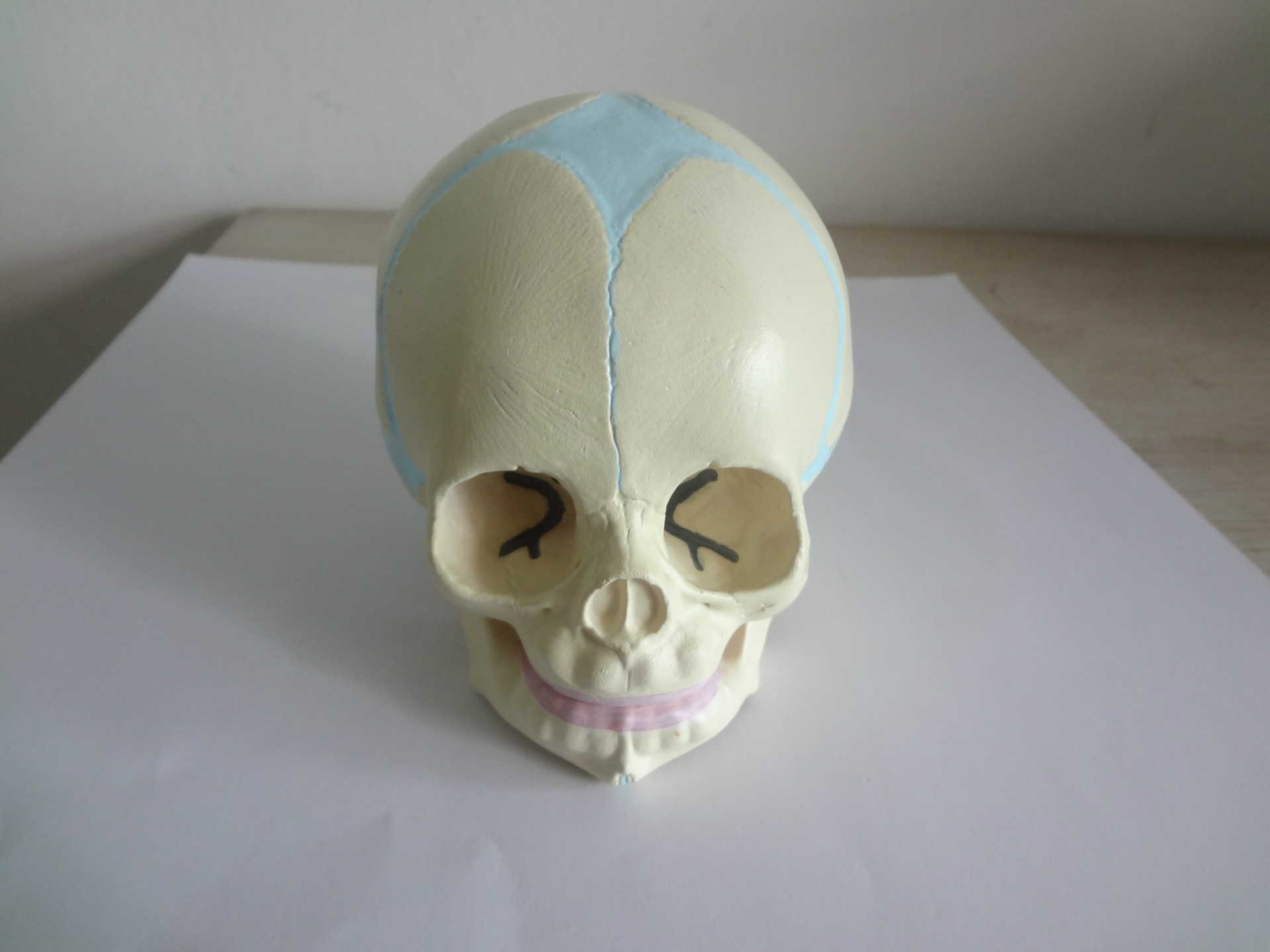 1:1 Human Fetal Baby Infant Anatomical Skull For Art Sketch High Simulation Teaching Use For  Human Anatomy Model