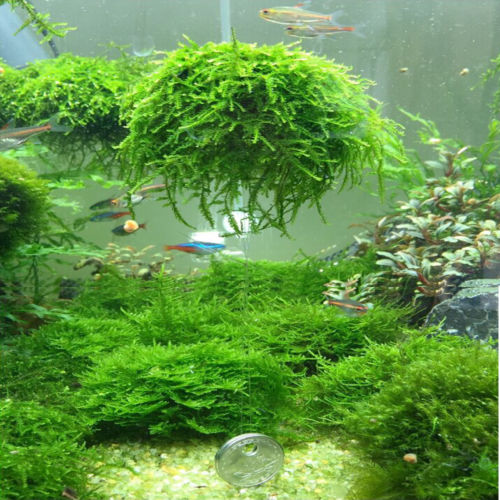 Hi-Q 5cm Aquarium Fish Tank Media Moss Ball Live Plant Filter Filtration Decor