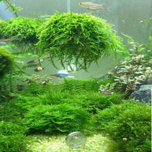 Hi-Q 5 cm acuario peces tanque Media Moss Ball Live planta filtro decoración de filtración(China)