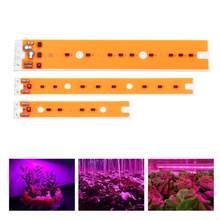 30W 50W 80W LED COB Chip Grow Light Source Full Spectum for Flood Iodine-tungsten Lamp High-efficiency Light Source AC110V/220V(China)