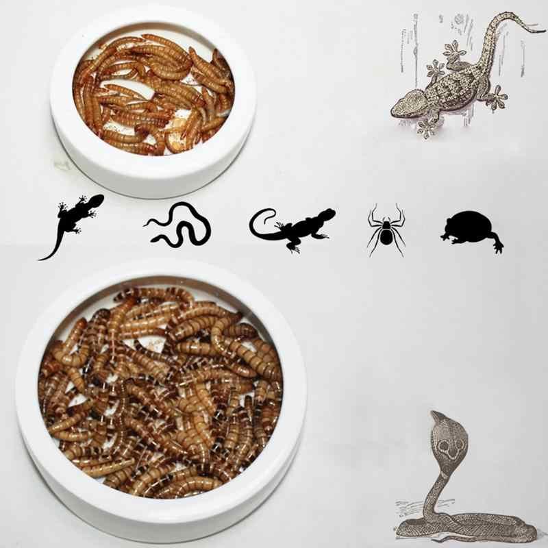 Fragile Ceramic Reptile Escape-proof Feeder Box Gecko Snake Bird Amphibians Hatching Case Breeding Tools Box