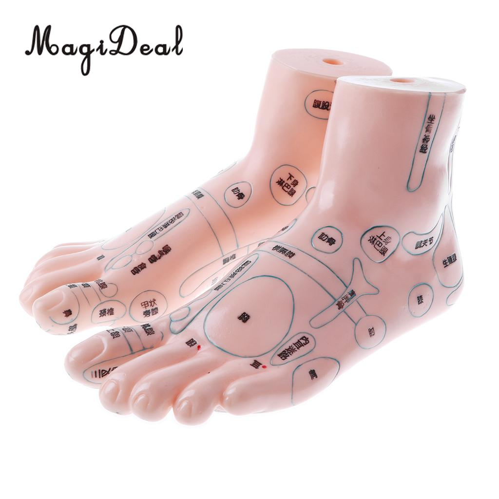 2 Pieces 19cm Massage Acupuncture Feet Model Set Reflexology Acupoint Medical School Teaching Tool Learning Display