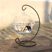 3 Size Desktop Hanging Glass Fish Tank Mini Grass Fun Fish T